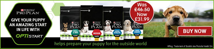 Welcome To Petshop Co Uk Online Pet Shop